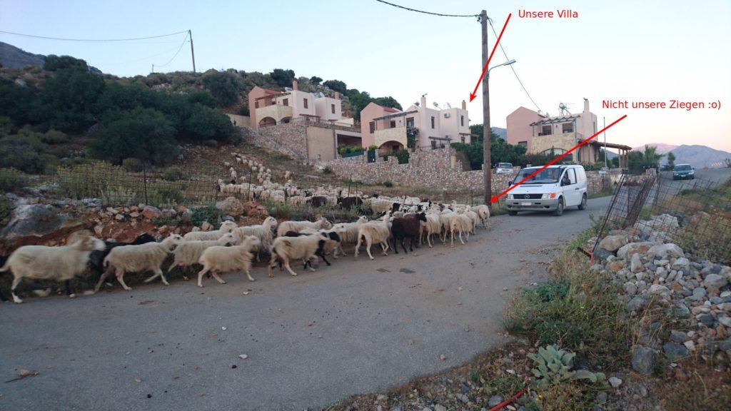 Smartphone-Foto: Am Abend punkt 19:30 wurden die Ziegen zurück geführt. Nachts hörte man sie trotz der Nähe nicht :-)